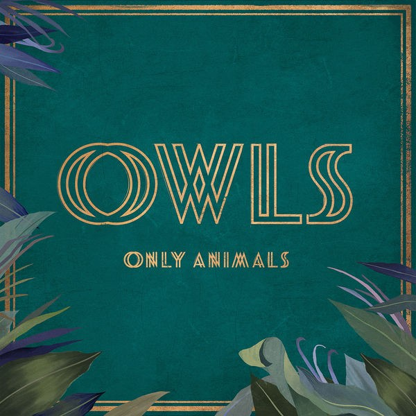 Owls - Only Animals